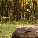 La forêt chantée - Pierre Tessier et Sylvain Marcotte